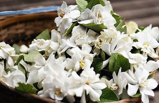 Daftar Bunga yang Bisa Dimakan